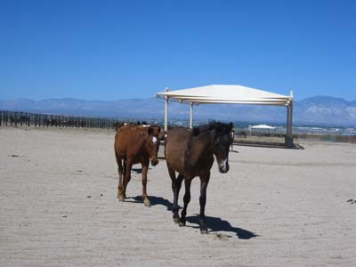 Wild Horse and Burro Adoption Center