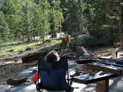 deer in campground