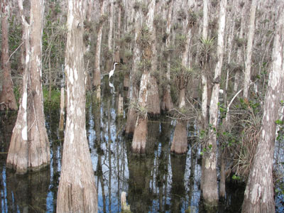 Big Cypress scenic loop road