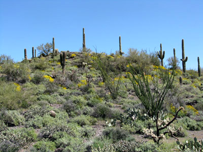 Camping in Superstition Mountains