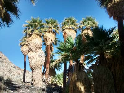 Palm Bowl Grove