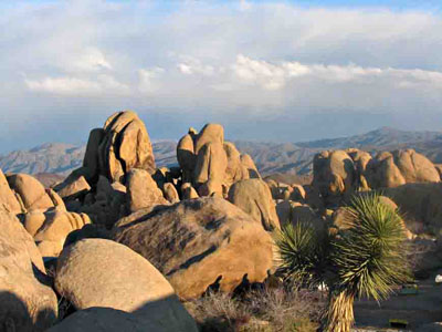Rocks in Joshua Tree National Park